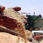 های تولید گندم 150x150 - وقتی هزینههای تولید سنخیتی با قیمت خرید ندارد/ نرخ خرید تضمینی گندم به نفع کشاورز یا جیب دولت؟