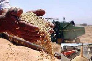 های تولید گندم 300x200 - وقتی هزینههای تولید سنخیتی با قیمت خرید ندارد/ نرخ خرید تضمینی گندم به نفع کشاورز یا جیب دولت؟