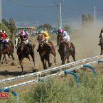 هفته ششم مسابقات اسبدوانی کورس تابستان بندرترکمن برگزار شد