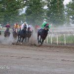 شناسایی 2500 اسب اصیل ترکمن در گلستان