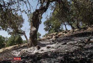 وسعت دقیق آتش سوزی در پارک ملی گلستان اعلام شد