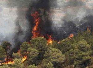 ملی گلستان 2 300x219 - نقشه پهنهبندی خطر آتشسوزی پارک ملی گلستان تهیه شد