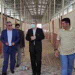 اسب چوگان ترکمن 150x150 - پروژه پرورش اسب چوگان در هفته دولت به بهره برداری می رسد