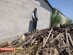 کشف و ضبط چوب آلات قاچاق در کوره ذغال گنبدکاووس