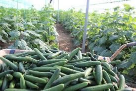 گلستان 1 - بخش کشاورزی و محیط زیست گلستان نیاز مبرم به تحقیقات پژوهشی دارد