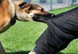 سگ گنبدکاووس - یکهزار و ۵۲۰ مورد گزش سگ فقط در گنبدکاووس ثبت شده است