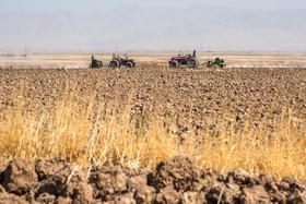 استان گلستان - سایه خشکسالی بر تولید گندم استان گلستان