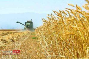300x200 - نرخ خرید تضمینی سال 97 گندم پیگیری میشود