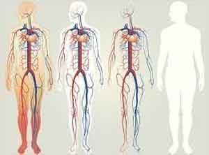 """مپس 300x222 - گوگل برای بدن انسان """"گوگل مپس"""" می سازد"""