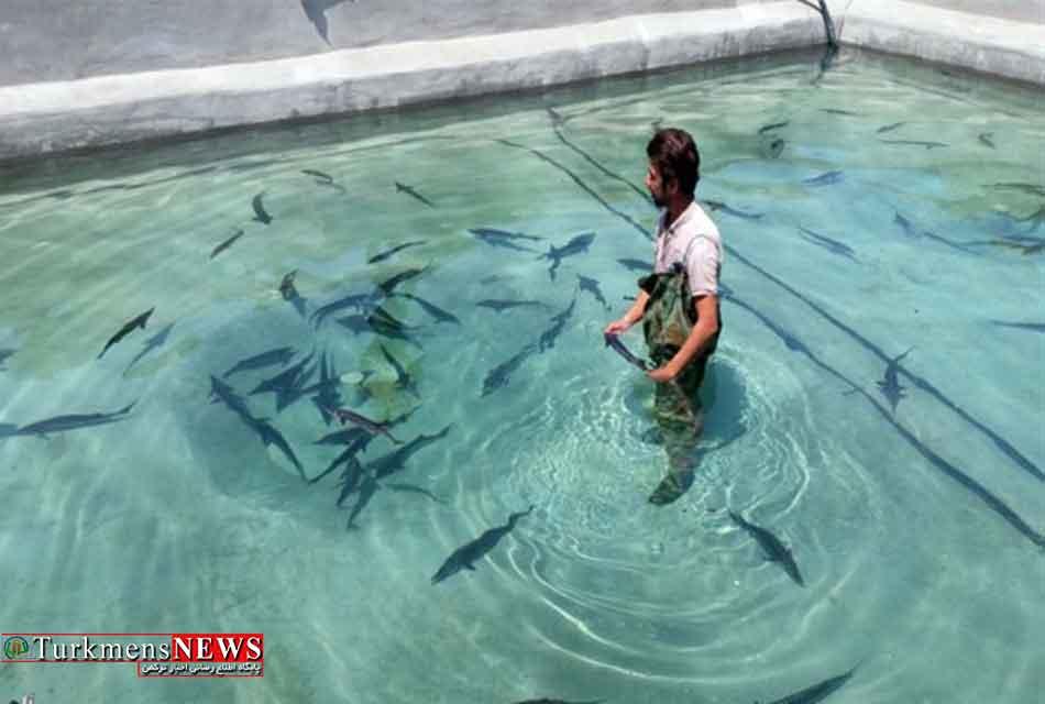 ۴۰ هزار بچه ماهی خاویاری از گلستان به ۱۷ استان کشور ارسال شد