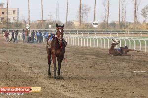 11 22 300x198 - حادثه در هفته یازدهم مسابقات اسبدوانی گنبدکاووس