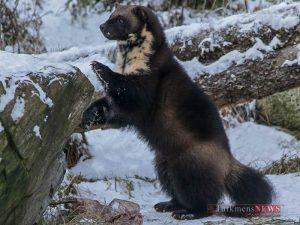 حیوانات شگفت انگیز قطب شمال