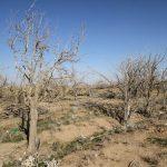 1418036640329 1002 th3 150x150 - وضعیت خشکسالی گلستان حادتر میشود
