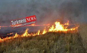 31712 300x184 - کشاورزان گلستان از آتش زدن بقایای گیاهی پرهیز کنند