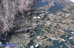 4 52 300x197 - قلب شهرستان گمیشان با گندآب و لجنزار کانال فاضلاب جریحه دار شده است+عکس