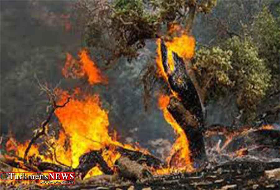 7 نفر به دادسرا در ارتباط با آتشسوزی جنگلهای گلستان احضار شدند