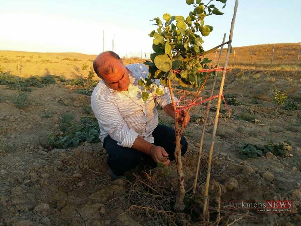 Arazi 21 Sh - اراضی کمبازده گنبدکاووس مستعد کشت گیاهان دارویی و توسعه باغات