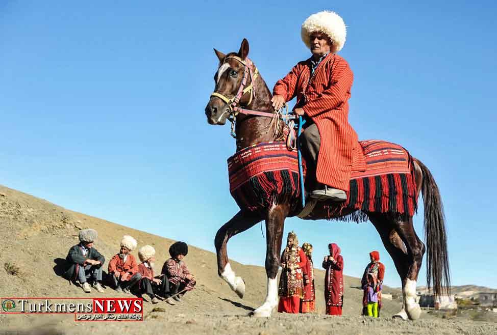 Asb Turkmen 1 2 - اسب نژاد ترکمن صنعتی که می توانست گل کند اما نشد