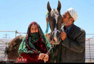 Asb Turkmen 1 3 300x205 - اسب نژاد ترکمن صنعتی که می توانست گل کند اما نشد
