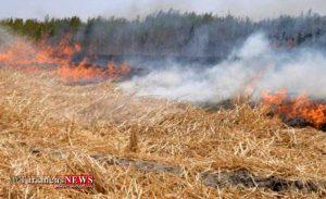 Atashsozi 22Kh 300x183 - 2 هکتار از اراضی زیرکشت گندمزاری در بندرگز در شعله های بی احتیاطی خاکستر شد