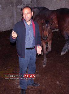 Avari Yaqub 1 223x300 - پرورش اسب در گنبدکاووس گامی برای درآمدزایی و اشتغالزایی