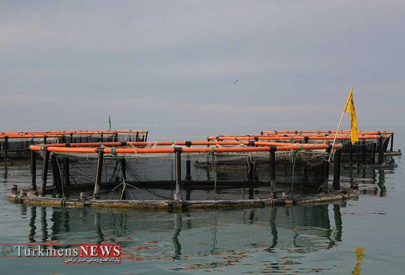 Darya 17M - ماهی در قفس مسیر توسعه آبزی پروری گلستان است