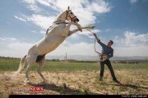 Horse 2 16F 300x200 - تجارت اسب با رعایت ضوابط و خط قرمزها مانعی ندارد