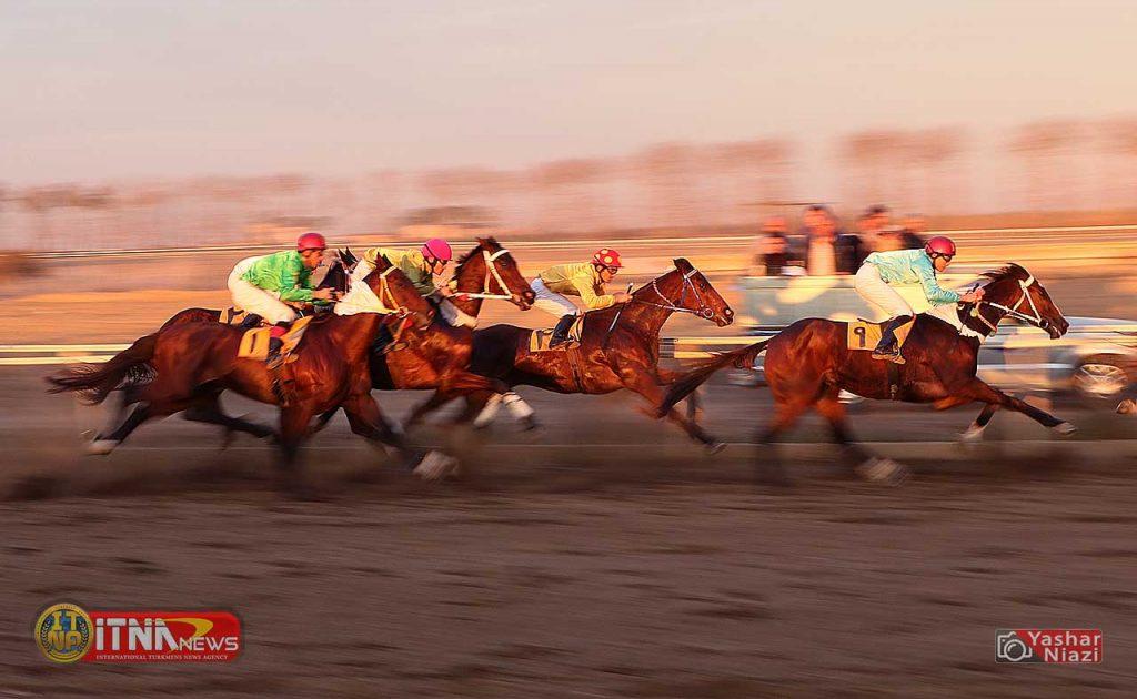 Horse News TN 2 1024x630 - هفته چهاردهم کورس اسبدوانی پاییزه گنبد برگزار شد+عکس