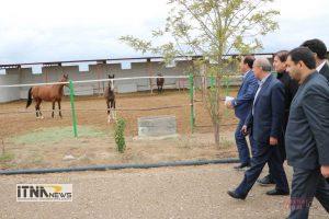 Itnanews shamlu 13M 179 300x200 - اسب ترکمن و سوارکاری محور توسعه پایدار شهرستان گنبد کاووس است+تصاویر