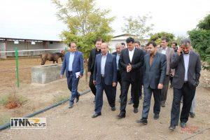 Itnanews shamlu 13M 183 300x200 - اسب ترکمن و سوارکاری محور توسعه پایدار شهرستان گنبد کاووس است+تصاویر