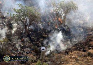 Jangal Golestan 4Az 300x211 - آتش جنگلهای گلستان کامل خاموش شد