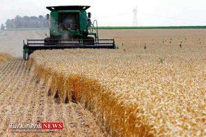 Keshavarzi 28E 300x200 - نرخ خریدتضمینی اعلام نشد/سناریوی دولت برای کشاورزان