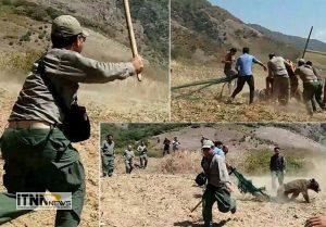 Khers 11 m 300x209 - تشکیل پرونده بررسی علت مرگ خرس در دادسرای گالیکش