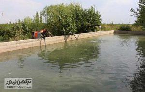 Parvaresh Mahi 21Az 300x190 - پرورش ماهی با بهرهمندی از آب چاههای کشاورزی گلستان 8 هزار شغل ایجاد میکند