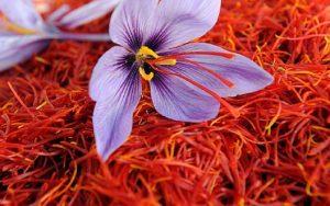 Safforn Farming 300x188 - ازبکستان به دنبال افزایش کشت زعفران