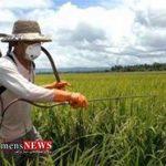 Sampashi 14F 150x150 - کشاورزان گلستاني حداقل 2 نوبت سمپاشی را در سطح مزارع انجام دهند