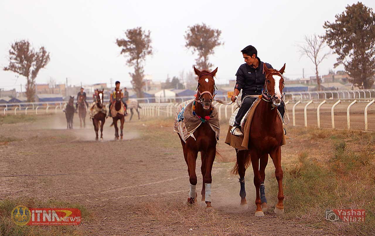 Sanat Asb ITNAnews 2 - پرورش اسب در گنبدکاووس گامی برای درآمدزایی و اشتغالزایی