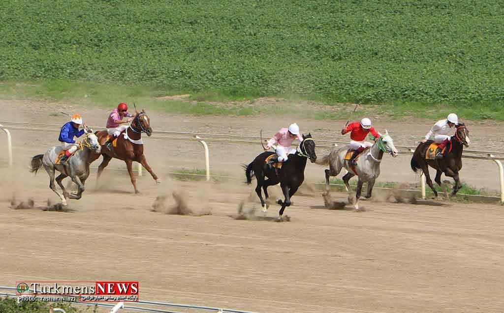 Savarkari 18E 1 - هفته سی و چهارم مسابقات سوارکاری گنبد کاووس برگزار شد+عکس