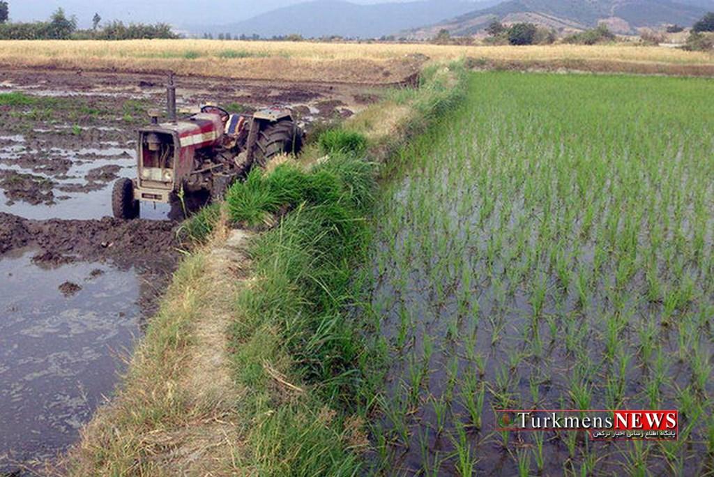 Shalikari 15 Sh - افزایش سطح کاشت شالی با استفاده غیر مجاز از آبهای زیرزمینی