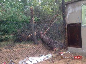 Toofan Horse TN 4 300x225 - اعتبار لازم برای بازسازی و مرمت مجموعه سوارکاری گنبدکاووس تامین شد+تصاویر
