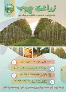 WhatsApp Image 2020 10 10 at 14.55.42 215x300 - پرداخت تسهیلات 100 میلیون ریالی برای هر هکتار زراعت چوب با بازپرداخت بعد از 6 سال