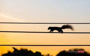 15 حقیقت جالب درباره سنجاب