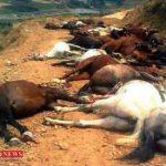 اسب کشی در مناطق مرزی برای قاچاق