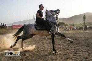 asb 3a 300x200 - وقتی واردات اسب نفس پرورش دهندگان آن را به شماره میاندازد