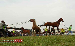 asb turkmens jashn 300x185 - رقابت 240 اسب در جشنواره ملی زیبایی اسب اصیل ترکمن