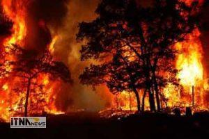 atash 29a 300x200 - آتش 5هکتار ازجنگل و درختان راش کردکوی را خاکستر کرد