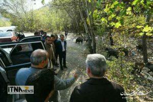 bazdid park 300x200 - بازدید استاندار از پارک ملی گلستان