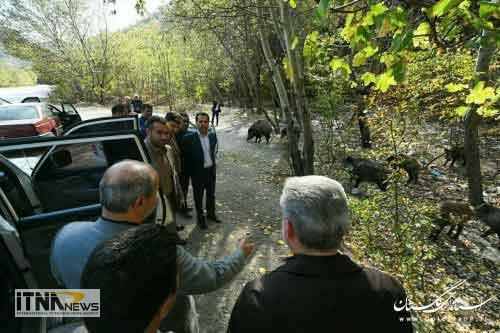 bazdid park - بازدید استاندار از پارک ملی گلستان