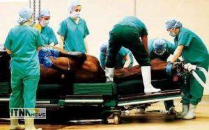 bimarestanasb1 2a 300x187 - راه اندازی بیمارستان اسب ملی در آققلا
