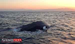 بندر ترکمن,واژگونی قایق,مفقود شدن صیادان
